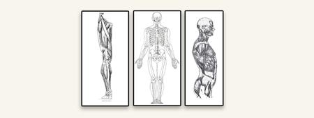 Image de la catégorie Anatomie artistique